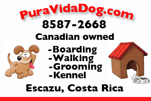 Pura Vida Dog Escazu Costa rica