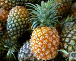 European Union Trade Costa Rica Pineapples
