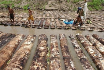 Around 40 percent of the mahogany and cedar that Peru exports to the United States is logged illegally, a 2010 study by the Environmental Research Agency, or EIA, said. EFE/File